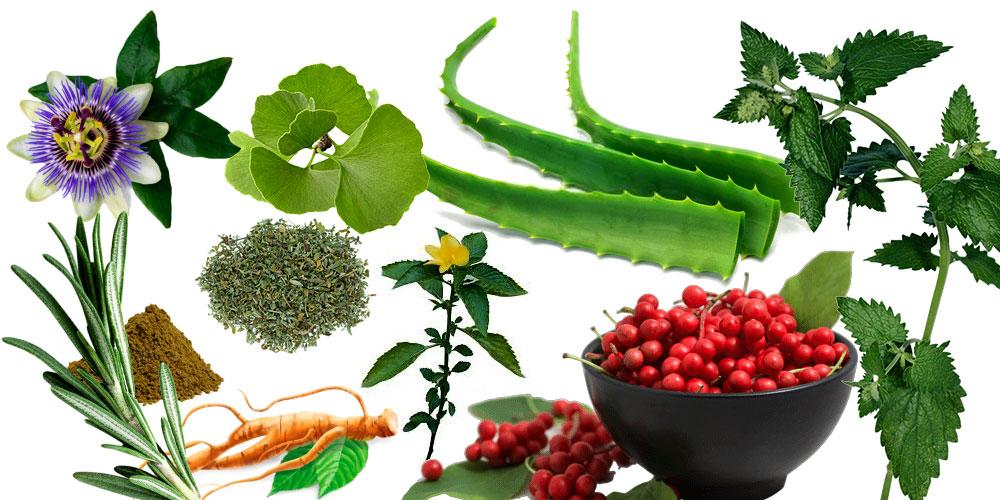 Erektionsstörungen pflanzliche Mittel